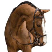 Rambo Micklem Competition Bridle - Bruin, Full