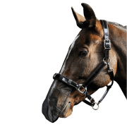 Harry's Horse Neusnet - Zwart, One size